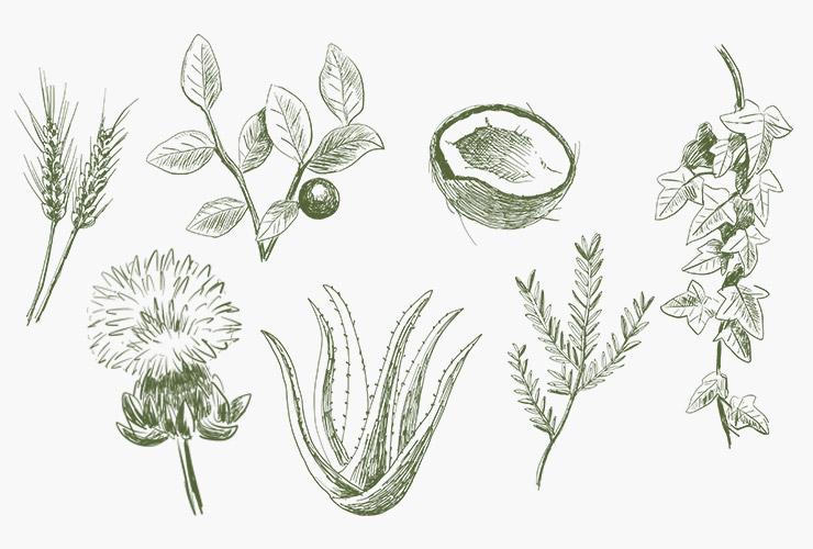 植物などのイラスト