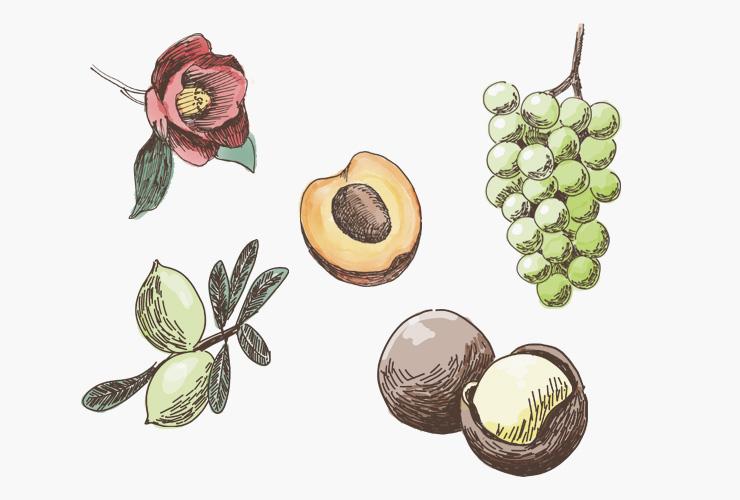花や果物のイラスト